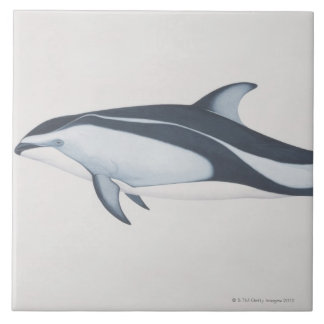Pacific White-Sided Dolphin Large Square Tile