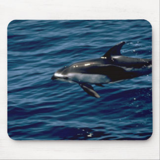 Pacific white-sided dolphin mousepads