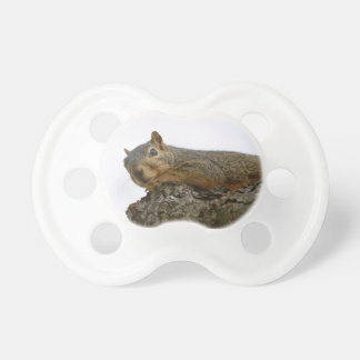 Pacifier Squirrel