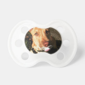 Pacifier with puppy using pacifier.