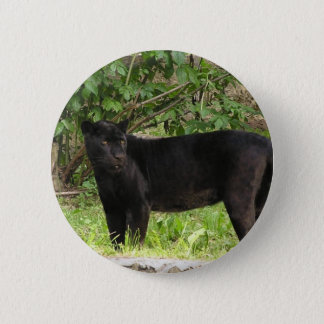 Pacing Panther Pin
