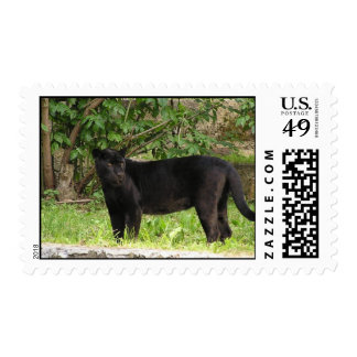Pacing Panther Postage Stamp