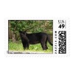 Pacing Panther Postage Stamp