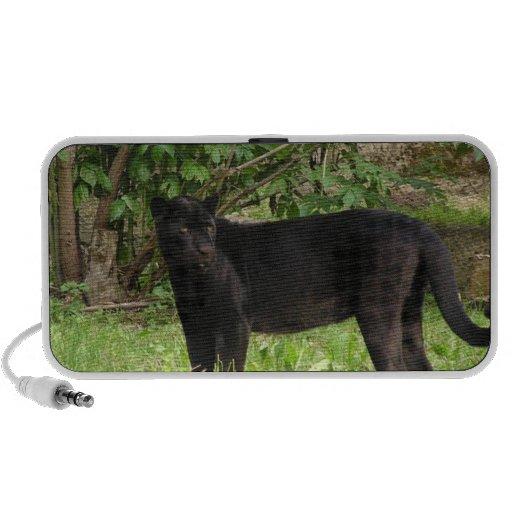 Pacing Panther Speakers