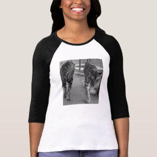 Pacing Tigers Womens Raglan T-Shirt