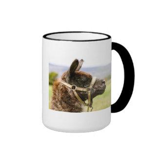 Pack camel ringer coffee mug