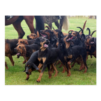 pack of bloodhounds postcard