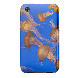 Pack of Jelly Fish iPhone 3 Case-Mate Case