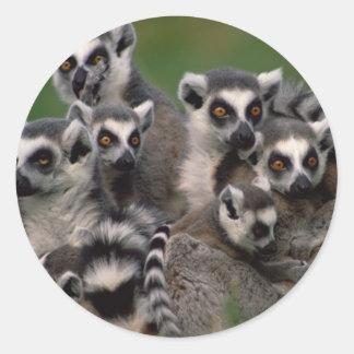 Pack of Lemurs Classic Round Sticker