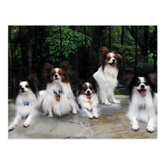 Pack of Papillons from Hershey Kiss Hero Kennels Postcards