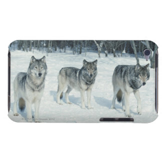 Pack of wolves at edge of snowy forest iPod Case-Mate case