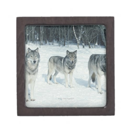 Pack of wolves at edge of snowy forest jewelry box