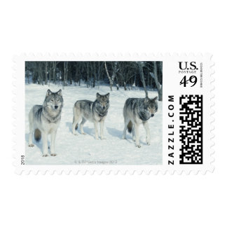 Pack of wolves at edge of snowy forest postage stamps