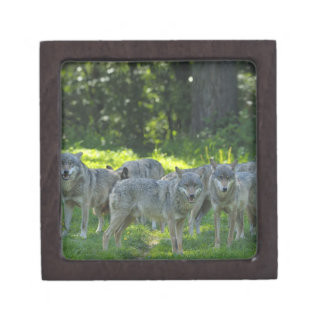 Pack of Wolves, Germany Premium Trinket Box
