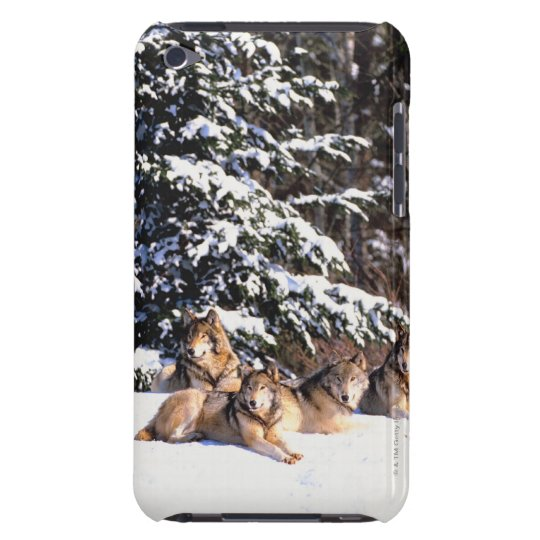Pack of wolves in winter barely there iPod cover