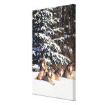 Pack of wolves in winter gallery wrapped canvas