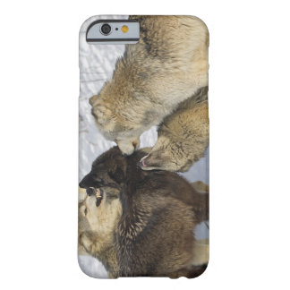 Pack of wolves interacting barely there iPhone 6 case
