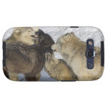 Pack of wolves interacting samsung galaxy SIII cases
