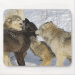 Pack of wolves interacting mousepad