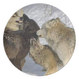 Pack of wolves interacting party plate