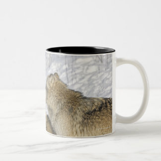Pack of wolves interacting Two-Tone coffee mug