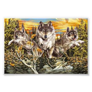 Pack of wolvesrunning photo print