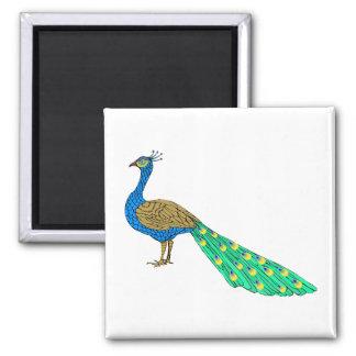 Packer Peacock Magnet