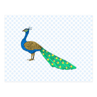 Packer Peacock Postcard