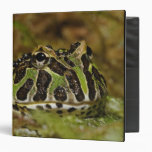 Pacman frog, Ceratophrys cranwelli or South 3 Ring Binder