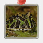 Pacman frog, Ceratophrys cranwelli or South Metal Ornament