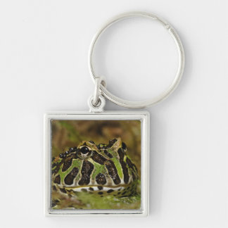 Pacman frog, Ceratophrys cranwelli or South Silver-Colored Square Keychain