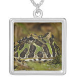 Pacman frog, Ceratophrys cranwelli or South Silver Plated Necklace