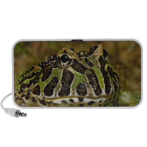 Pacman frog, Ceratophrys cranwelli or South Mp3 Speaker