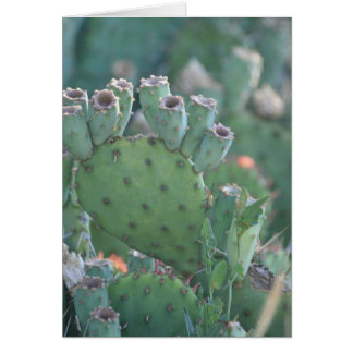 Paddle Cactus Card