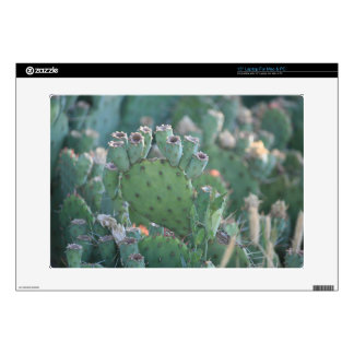 Paddle Cactus Laptop Decal