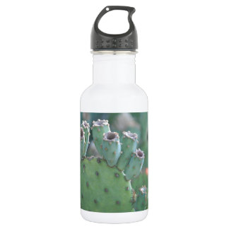 Paddle Cactus Stainless Steel Water Bottle
