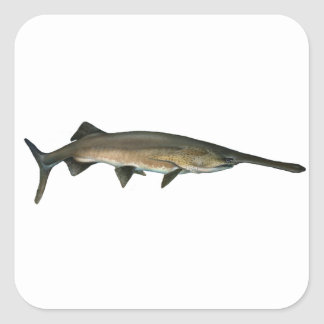 Paddlefish Pegatina Cuadrada