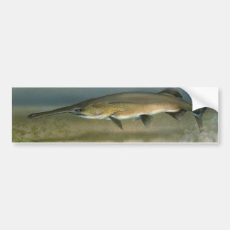 Paddlefish Pegatina Para Auto