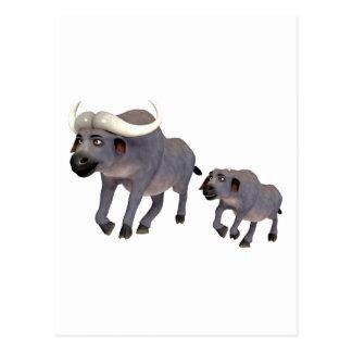 Padre y hijo del búfalo del cabo del dibujo postal
