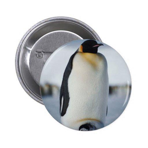 Padre y polluelo del pingüino