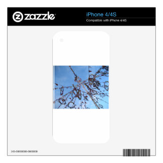 Padstow Skin For iPhone 4S