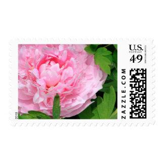 Paeonia del Paeony el | del Peony el | de la flor Sello Postal