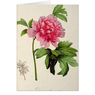 Paeonia Moutan, c.1799 Card
