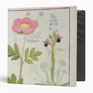 Paeonia or Peony, and Orchis myanthos 3 Ring Binder