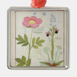 Paeonia or Peony, and Orchis myanthos Metal Ornament