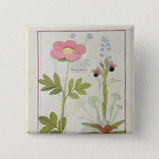 Paeonia or Peony, and Orchis myanthos Pinback Button