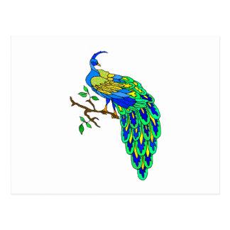 Pagiel Peacock Postcard