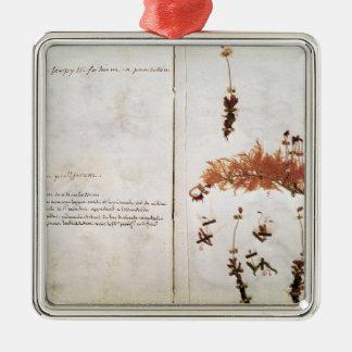Página 15 de un herbario adorno navideño cuadrado de metal