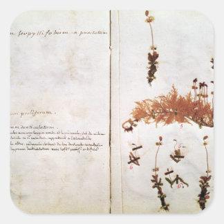 Página 15 de un herbario pegatina cuadrada