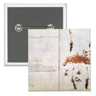 Página 15 de un herbario pin cuadrado